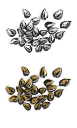Illustration of seeds of Soba (Japanese buckwheat noodles).