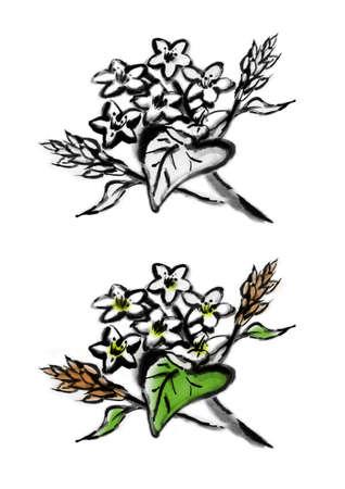 Illustration of flowers of Soba (Japanese buckwheat noodles). 免版税图像