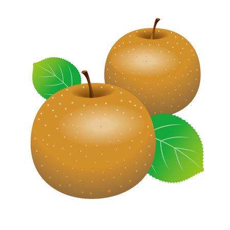 Illustration of Japanese pear. White background. 免版税图像