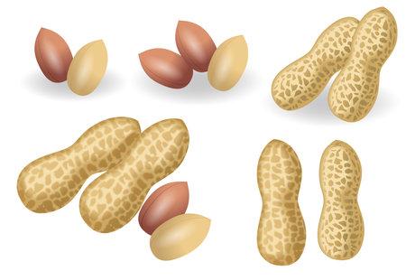Illustration of peanuts. Icon set.