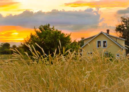 Wheat Fields Waving as the Sun Sets on the Farm photo