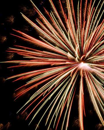 Multi-Colored Firework Bursting in the Night Sky