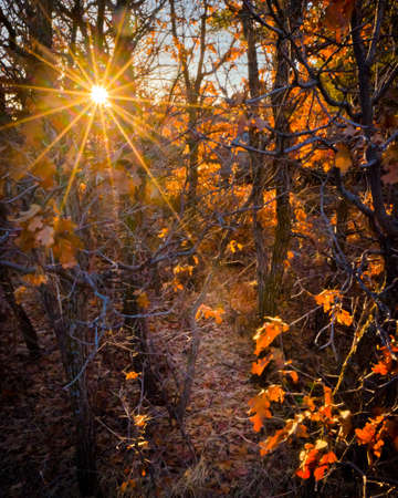hiking path: Morning Sunburst Peaking Through Forest Illuminating Hiking Path