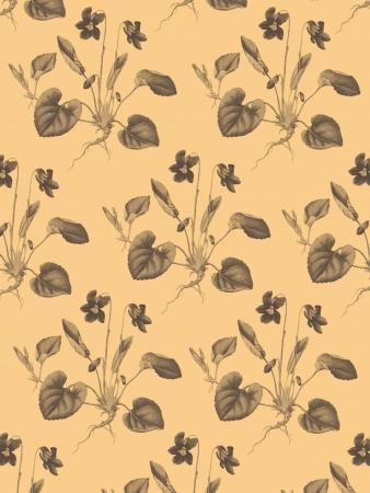 violas: Violas Pattern with ivory background
