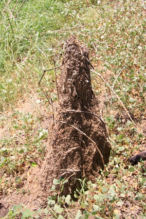 dwelling mound: Termite mound in the field