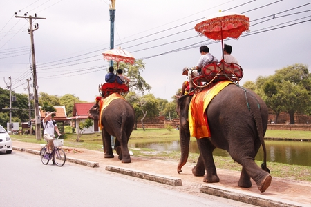 AYUTTHAYA, THAILAND - AUGUST 10   Tourist group rides on the backs of elephants visit the ancient city of Ayutthaya on August 10,2013 in Ayutthaya,Thailand