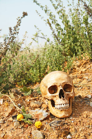 life after death: still life with skull human on dry ground and dry field with blue sky life after death   Stock Photo