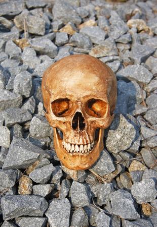 strong skeleton: still life with skull on the stone pile of gravel