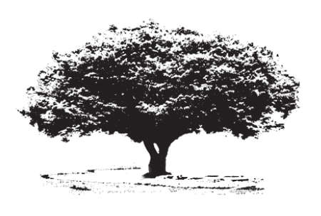 oak leaves: Big tree Illustration