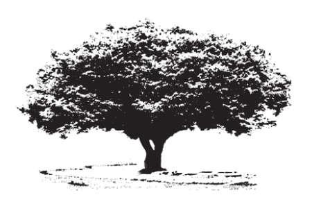bomen zwart wit: Grote boom Stock Illustratie