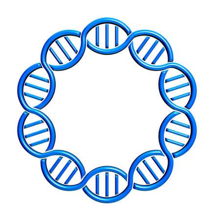 clonacion: ADN c�rculo Strand y sin costuras