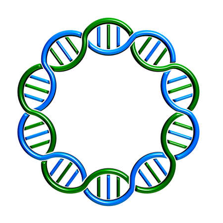 cloning: DNA circle Strand and Seamless