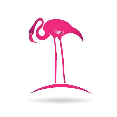flamenco ave: Flamingo p�jaro sobre el estanque