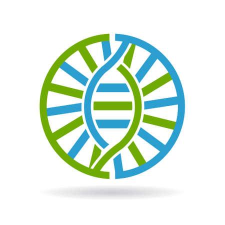 chromosomes: DNA  21 chromosomes circle. grtaphic design