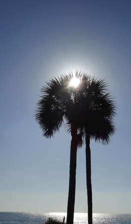 Palm Trees on Sunny Day Beach Archivio Fotografico
