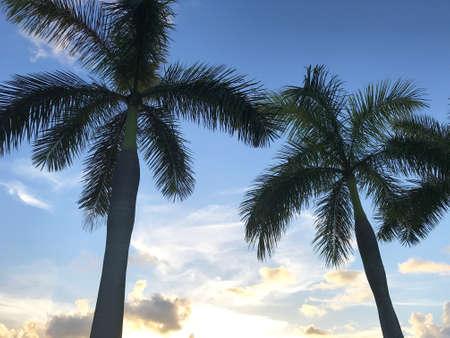 Siluetta tropicale della palma contro cielo blu