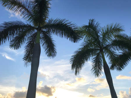 Tropical palm tree silhouette against blue sky Stock Photo