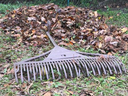 Rake and Dry Leaves. Photo image Stok Fotoğraf