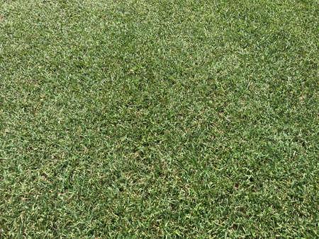 Grass golf Texture. Photo image