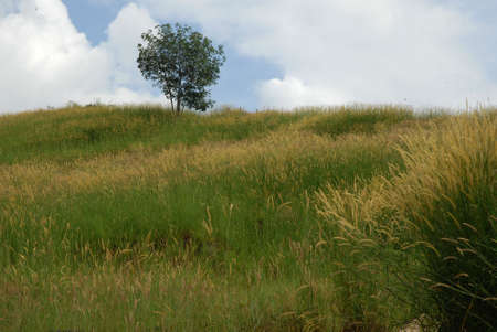 weeds, green fields,green weeds.