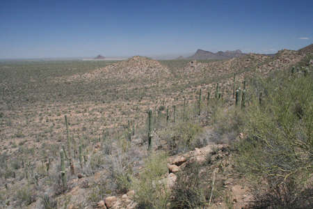 Desert Landscape in Arizona Saguaro National Park West photo