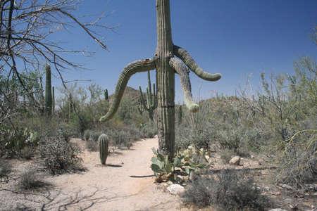 Arizona Desert Hiking Trail Stock Photo - 15073136