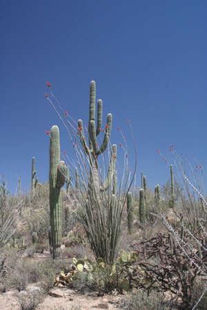 Arizona Desert Landscape with Saguaro Cactus Stock Photo - 15073139