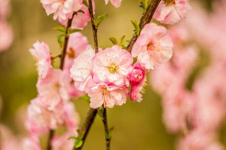 beautiful spring flowers on a branch of a tree