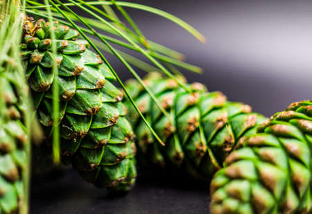 ir: green fir cones on the black background