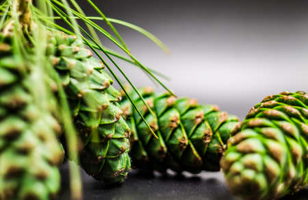 green fir cones on the black background