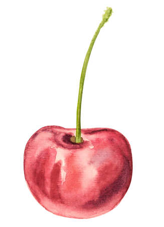 Summer fruit. Watercolor illustration of a cherry isolated on white hand drawn illustration with clipping path Stock Photo
