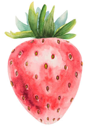Summer fruit. Watercolor illustration of a strawberry isolated on white hand drawn illustration with clipping path Stock Photo