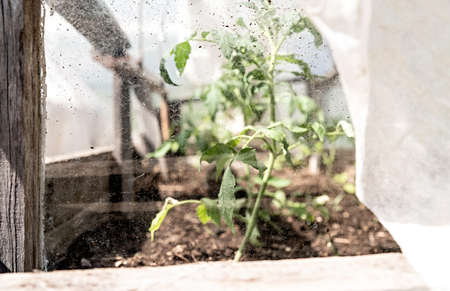 Gardening concept. Old wooden garden greenhouse plants through the dirty glass