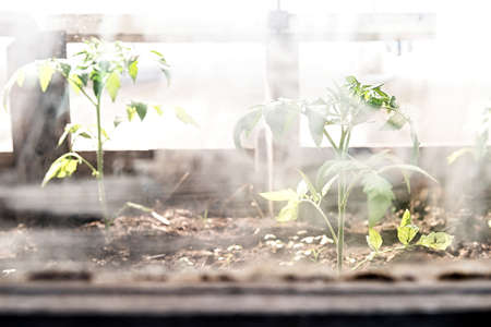 Gardening and growing concept. Greenhouse plants through the dirty glass Stock Photo