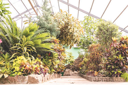 Tropical plants and flowers. Gardening concept. Indoors of greenhouse with tropical plants and flowers Stockfoto