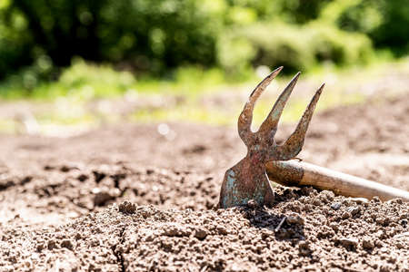 Gardening concept. Old rake in the soil on the farm in the daylight Stockfoto