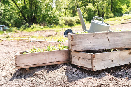 Gardening concept. Wooden boxes with small green sprouts ready for seeding on the farm