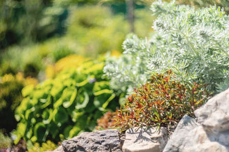 Succulent plants. Gardening concept. Succulents growing in the garden in a sunny day Stock Photo
