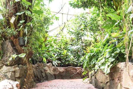 Gardening and growing concept. Tropical garden decoration with plants, flowers, and trees - path walk way in greenhouse