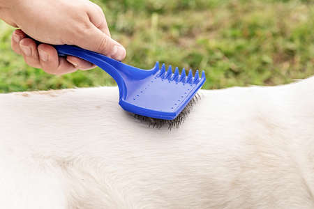 Pet caring. Man holding a brush in his hand combing dog fur