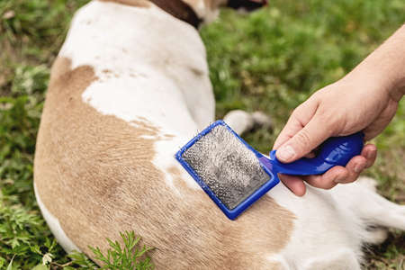 Pet caring. Man brushing a mixed breed dog hair outside while having a walk Imagens