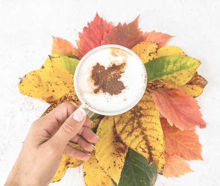 Autumn concept. White cup of coffee with cocoa on the top on colorful autumn leaves top view flat lay Reklamní fotografie
