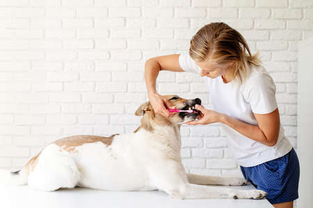 Young blond woman brushing teeth of her dog