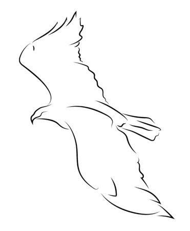 Flying black line eagle on white background. Hand drawing bird vector graphic.