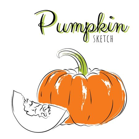 Sketch pumpkins. Vector paint hand drawn composition with squash in cartoon style. Isolated on white background.