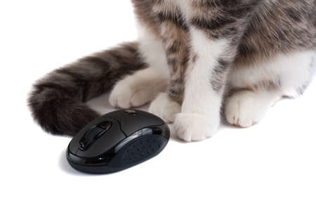 kat siting near wireless mouse closeup. isolated on white photo