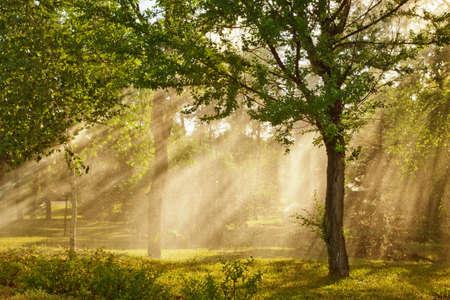 Shafts of sunlight bursting through the misty trees.