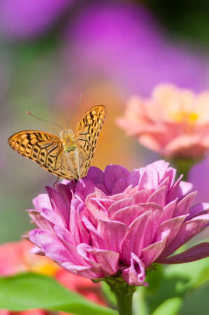 macro photo of butterfly on a flower.
