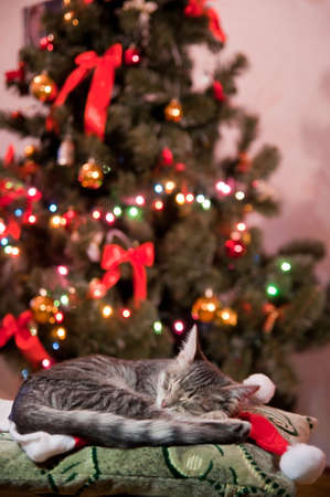 cat sleeping near to Christmas tree