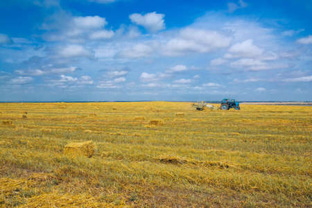 harvests: tractor harvests on a yellow field in summer day
